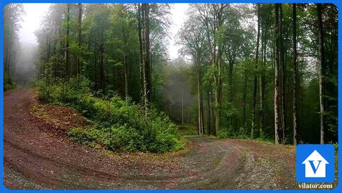 جنگل دو هزار تنکابن ویلاطور