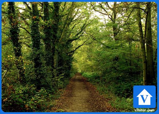 جنگل روستای بونده محمودآباد ویلاطور