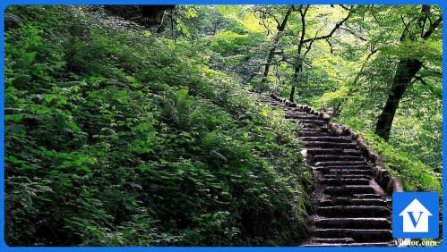 جنگل هزار پله ویلاطور2