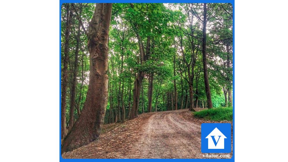 جنگل هلومسر ویلاطور3