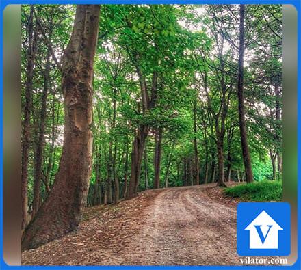 جنگل چالوس ویلاطور