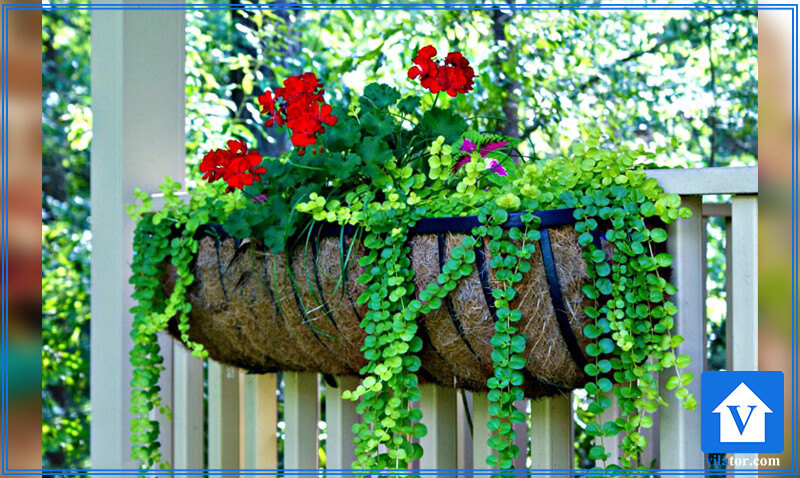 گلکاری فضای سبز حیاط قاب گلدان آویزان ویلاطور
