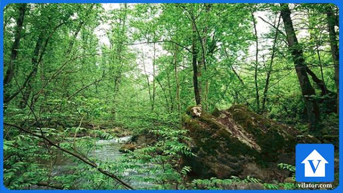 پارک جنگلی کشپل نور ویلاطور