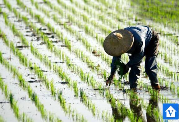 کشاور خرید ویلا شمال