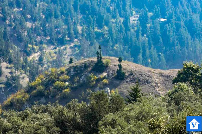 خرید ویلا جنگلی تپه مارکیلک